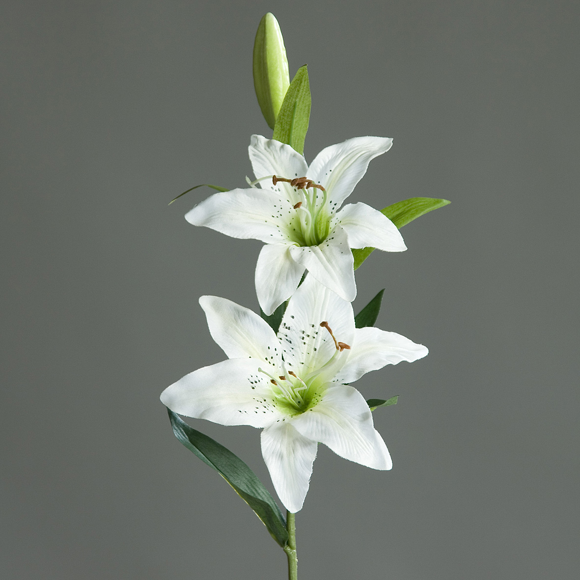 этом ветка белой лилии фото явно допускает